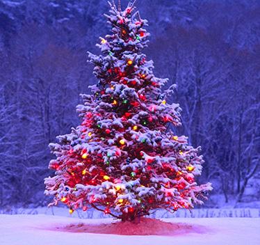 San Lorenzo Martire - L albero di Natale - Splash